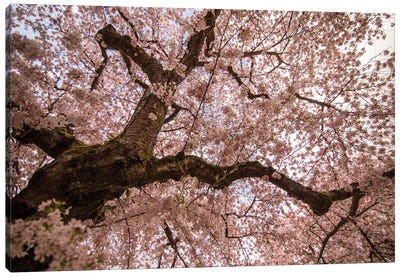 Spring's Arrival Canvas Art Print