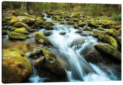 Moss Rocks Canvas Art Print