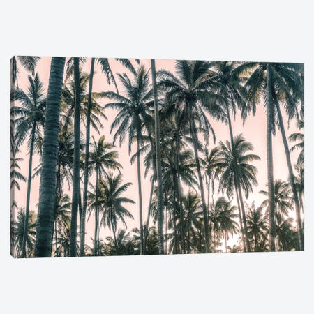 Palms View on Pink Sky I Canvas Print #AAS46} by Andy Amos Canvas Art