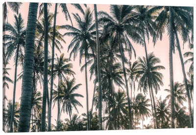 Palms View on Pink Sky I Canvas Art Print