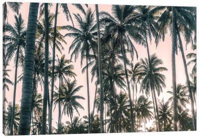 Palms View on Pink Sky I Canvas Art Print