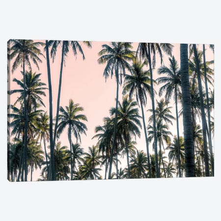 Palms View on Pink Sky II Canvas Print #AAS47} by Andy Amos Canvas Art