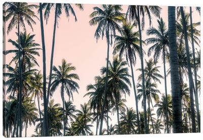 Palms View on Pink Sky II Canvas Art Print