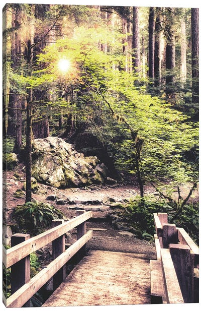 Sunlight on the Forest Path Canvas Art Print