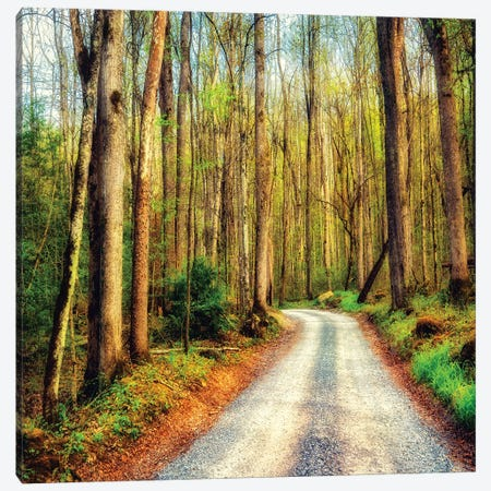 Wood Path Canvas Print #AAS49} by Andy Amos Art Print