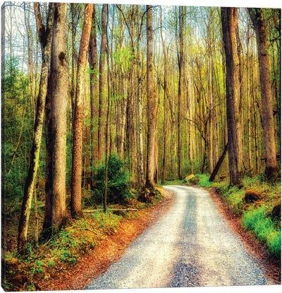 Wood Path Canvas Art Print
