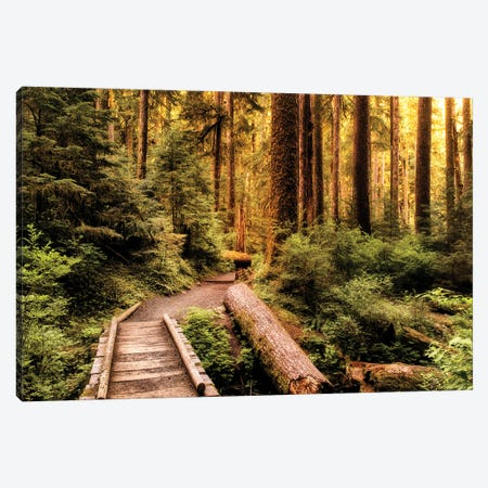 Nature Hiking Trail Canvas Print #AAS73} by Andy Amos Canvas Art
