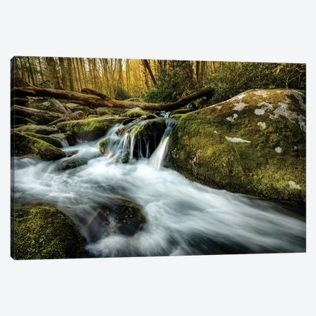 Fallen Timber Canvas Print #AAS7} by Andy Amos Canvas Art