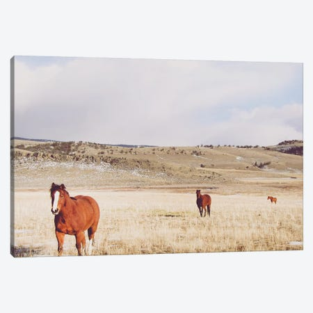 Pasture Trio Canvas Print #ABA54} by Little Cabin Art Prints Art Print