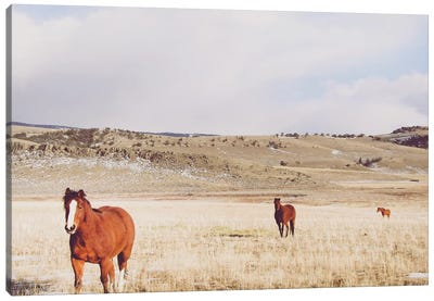 Pasture Trio Canvas Art Print