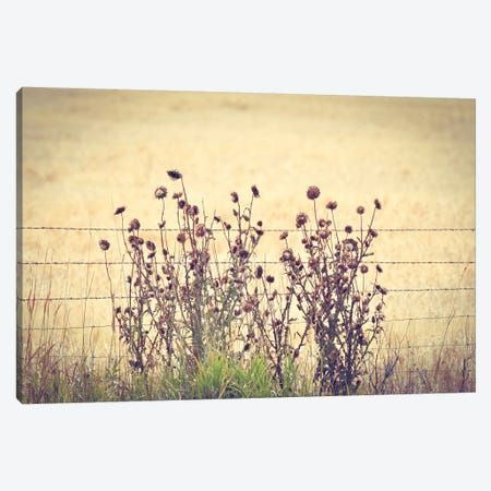 Barbed Wire Thistles Canvas Print #ABA6} by Little Cabin Art Prints Canvas Art