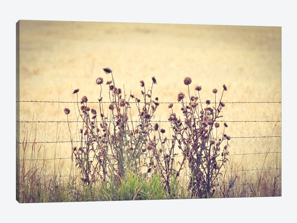 Barbed Wire Thistles by Little Cabin Art Prints 1-piece Canvas Art Print