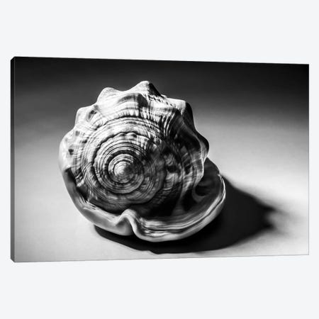 Shell III Canvas Print #ABA77} by Little Cabin Art Prints Canvas Art Print