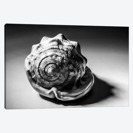 Shell III Canvas Print #ABA77} by Little Cabin Art Prints Canvas Art Print