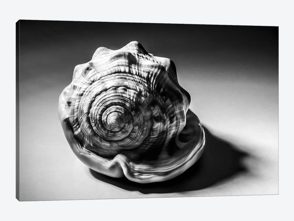 Shell III by Little Cabin Art Prints 1-piece Canvas Print