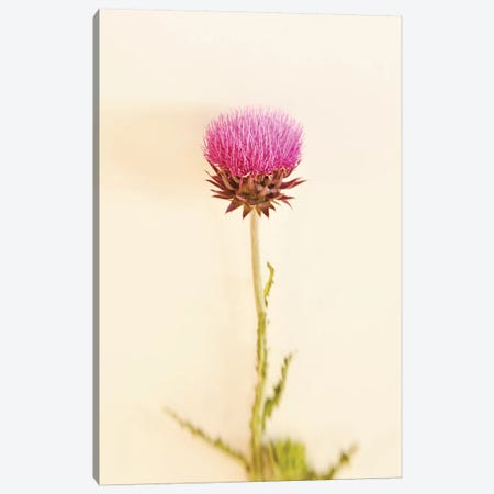 Bashful Pink Canvas Print #ABA7} by Little Cabin Art Prints Canvas Wall Art