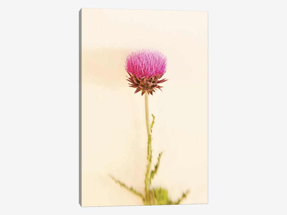 Bashful Pink by Little Cabin Art Prints 1-piece Canvas Artwork