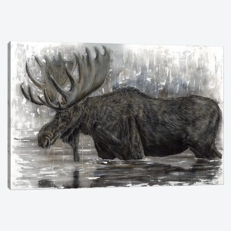 Grand Majestic Moose Canvas Print #ABD11} by Angela Bawden Canvas Print