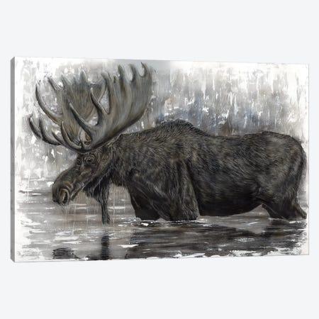 Grand Majestic Moose Canvas Print #ABD11} by Angela Bawden Canvas Print