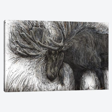 Untamed Moose Canvas Print #ABD29} by Angela Bawden Canvas Art