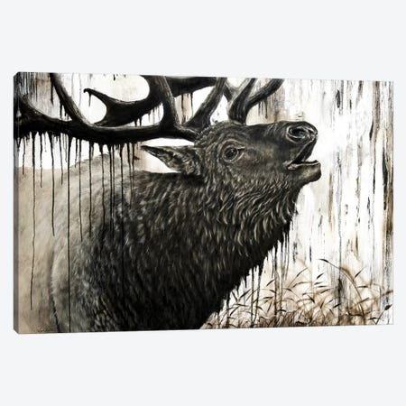 Bugling Bull Elk Canvas Print #ABD2} by Angela Bawden Canvas Artwork