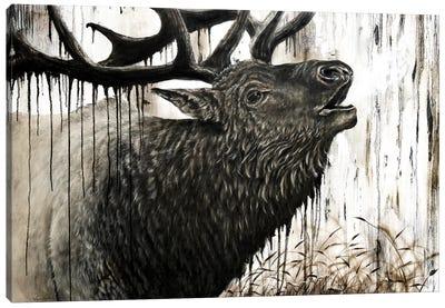 Bugling Bull Elk Canvas Art Print