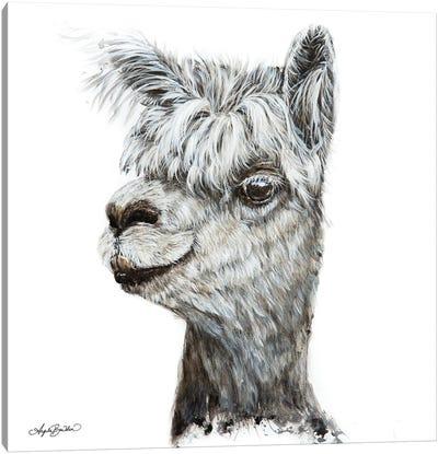 Alphie The Alpaca Canvas Art Print