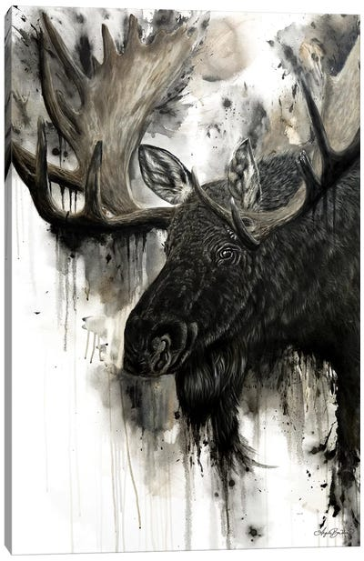 Bull Moose Canvas Art Print