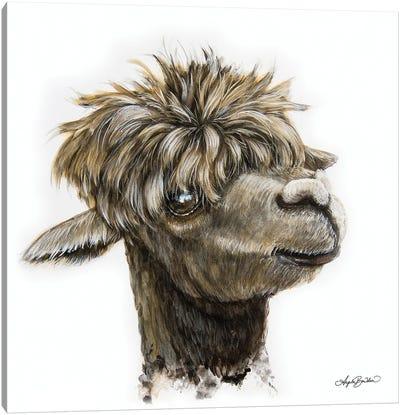 Skippy The Alpaca Canvas Art Print