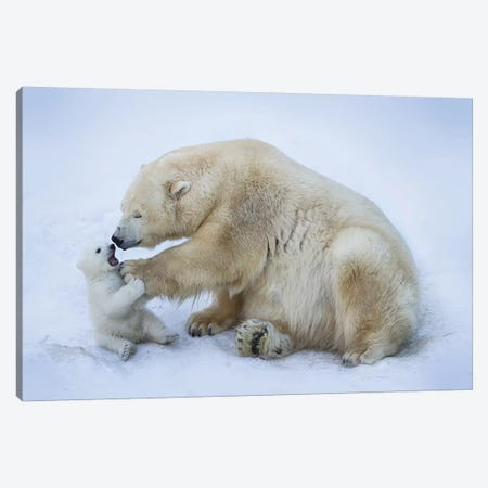 Polar Bear With Mom I Canvas Print #ABE2} by Anton Belovodchenko Art Print