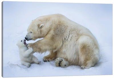 Polar Bear With Mom I Canvas Art Print