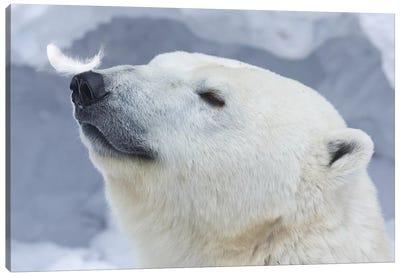 Polar Bear Portrait I Canvas Art Print