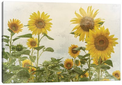 Sunny Mood Canvas Art Print
