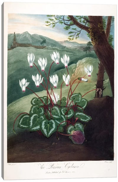 Thornton's Temple Of Flora Series: The Persian Cyclamen Canvas Print #ABR1