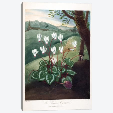The Persian Cyclamen Canvas Print #ABR1} by Abraham Pether Art Print
