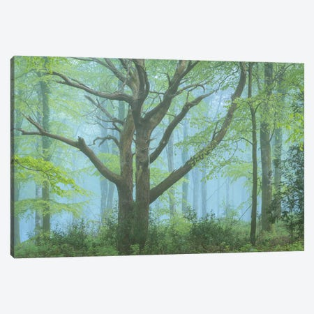 Spring Forest Canvas Print #ABU107} by Adam Burton Canvas Art Print