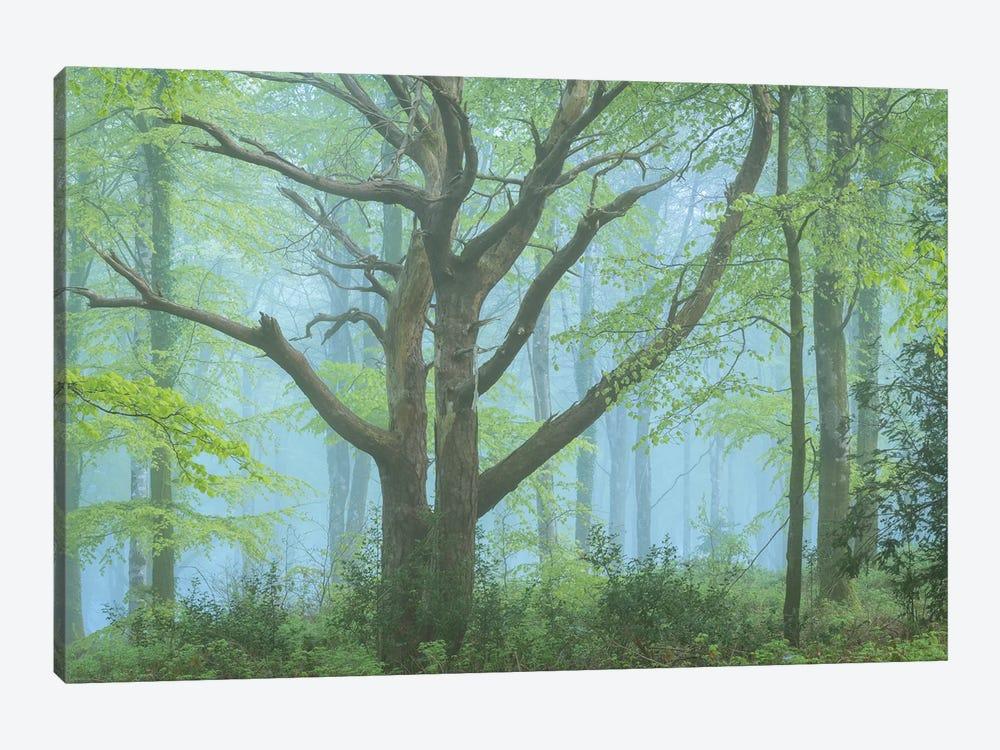 Spring Forest by Adam Burton 1-piece Canvas Artwork
