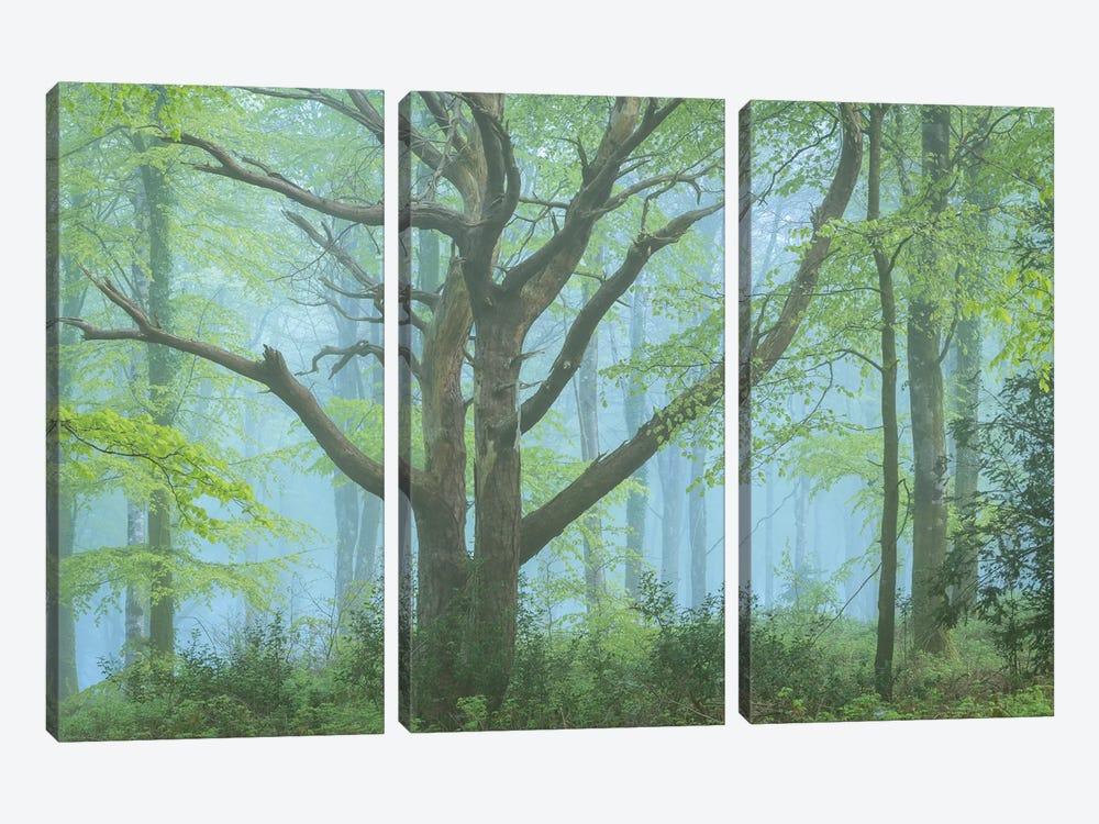 Spring Forest by Adam Burton 3-piece Canvas Artwork