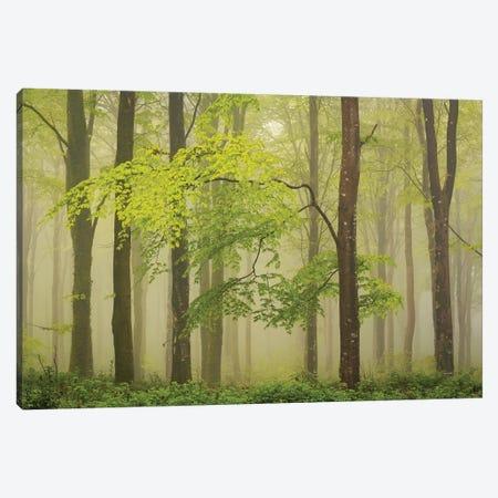 Spring Woodland Canvas Print #ABU108} by Adam Burton Canvas Artwork