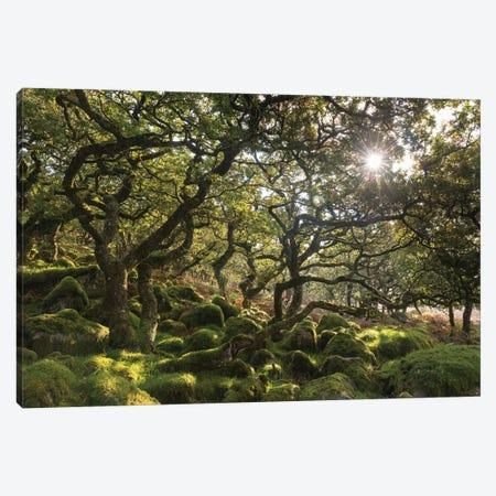 Sunlit Woodland Canvas Print #ABU109} by Adam Burton Canvas Artwork