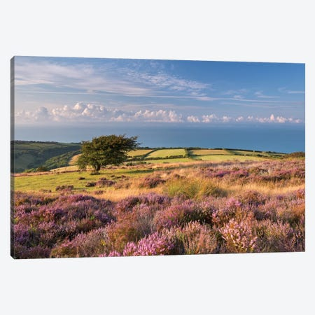 Colours of Summer (Exmoor) Canvas Print #ABU10} by Adam Burton Canvas Art
