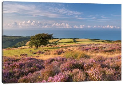 Colours of Summer (Exmoor) Canvas Art Print