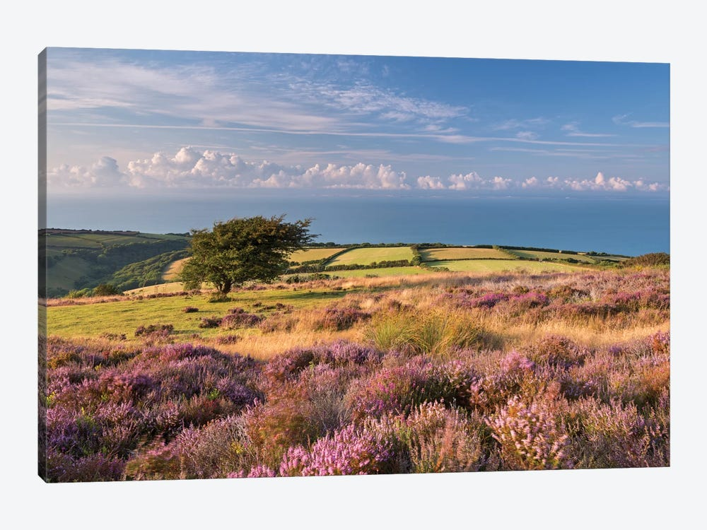 Colours of Summer (Exmoor) by Adam Burton 1-piece Canvas Artwork