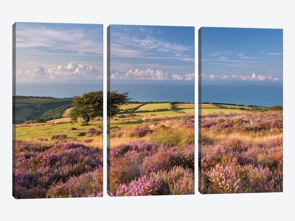Colours of Summer (Exmoor) by Adam Burton 3-piece Canvas Wall Art