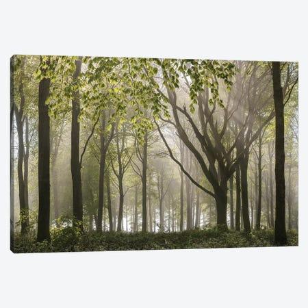 Woodland Morning Canvas Print #ABU118} by Adam Burton Art Print