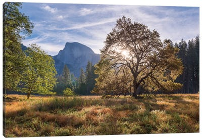Cook's Meadow Canvas Art Print