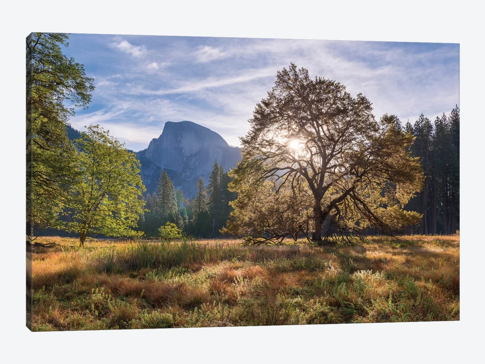 Cook's Meadow 1-piece Canvas Art Print