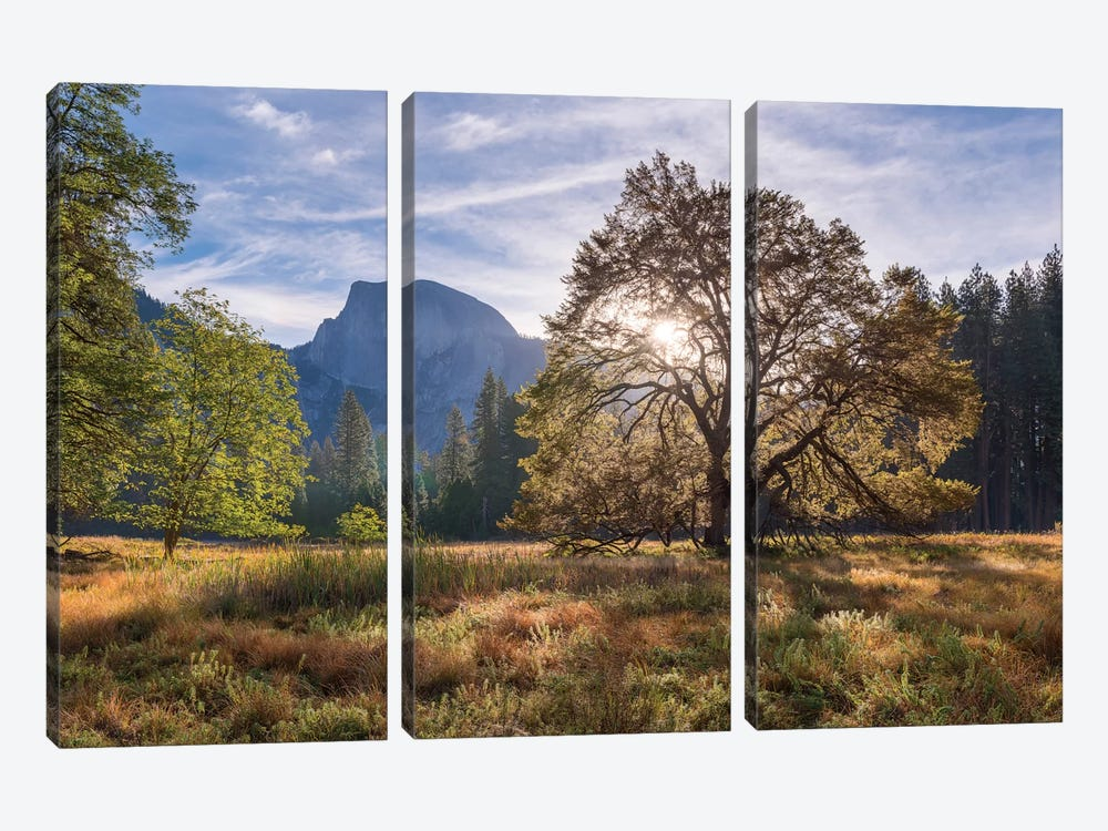 Cook's Meadow by Adam Burton 3-piece Canvas Print