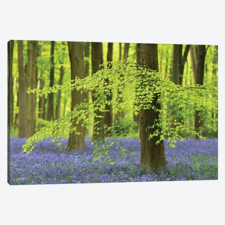 Bluebell Forest Canvas Print #ABU122} by Adam Burton Canvas Art