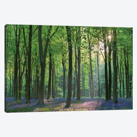 Bluebell Forest II 3-Piece Canvas #ABU124} by Adam Burton Canvas Print